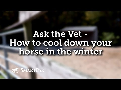 Ask the Vet - How to cool down your horse in the winter