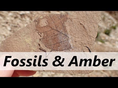 Finding AMBER & fossils in British Columbia