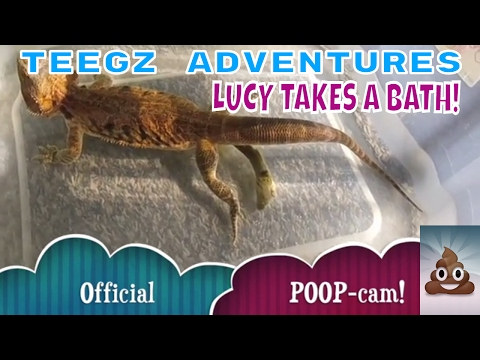 Bearded Dragon Takes A Bath - Poops in the tub! | Teegz Adventures!