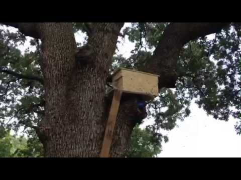 Bee trap out in a tree