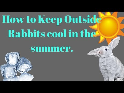 How to keep your outside rabbit cool in summer