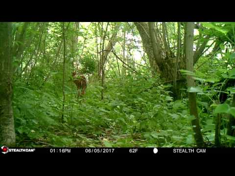 Fawn calls for Mom