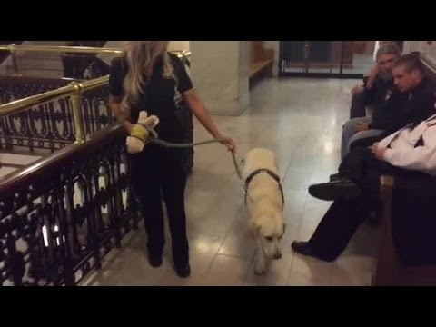 Therapy dog walks into Akron court