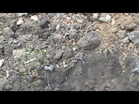 Garden Soil Texture versus Other Soils in My Yard