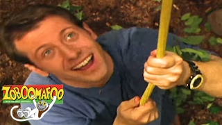 🐒 Zoboomafoo 120 - Animal Daycare | HD | Full Episode