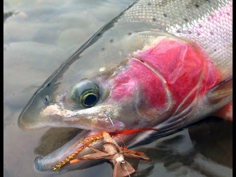 Steelhead Winter Dry Fly Fishing