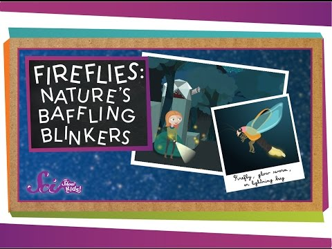 Fireflies: Nature's Baffling Blinkers