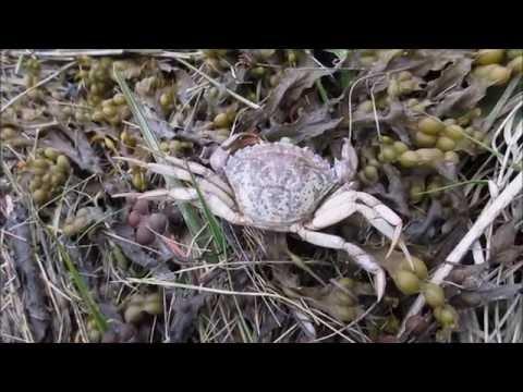Crab Infestation in Nova Scotia!