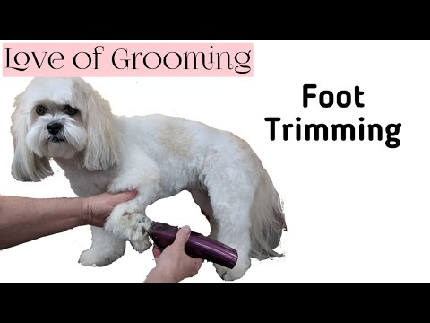 How to Shave a Dogs Foot Pad