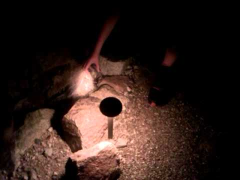 Catching a Tarantula in Marana Arizona