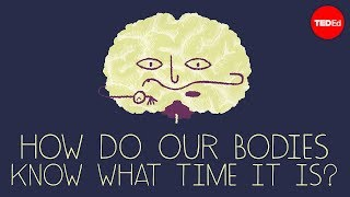 How does your body know what time it is? - Marco A. Sotomayor