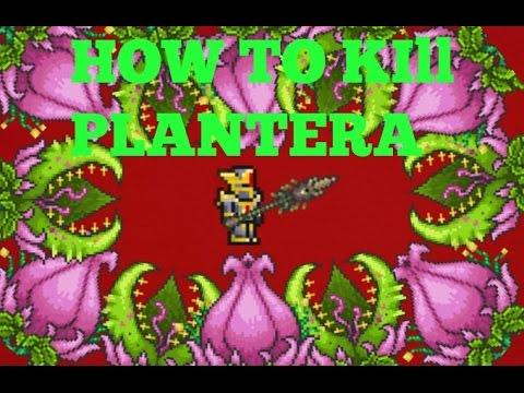 How To Kill Plantera PC, Xbox, PS3:PS4