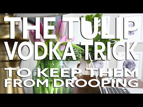 The Tulip Vodka Trick - Keep Tulips From Drooping!