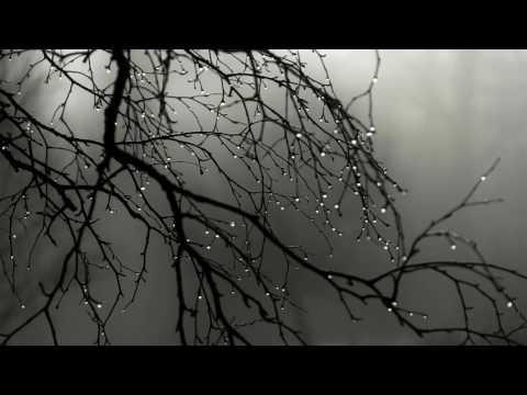 Rain & Deep Thunder Nature Sounds for Relax, Study, Sleep