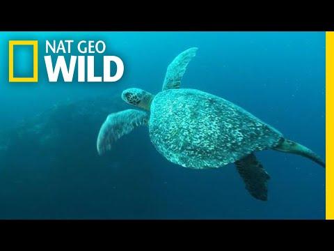 World Turtle Day: A Day Worth Shellabrating | Nat Geo Wild