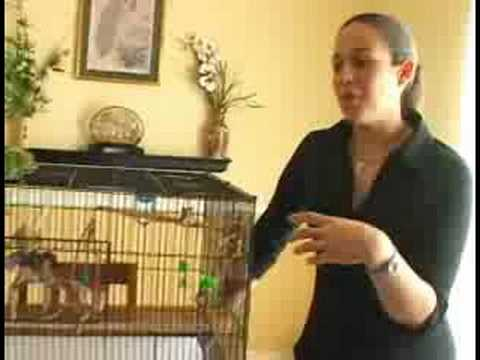 Caring for Parakeets : Male Vs. Female Parakeets