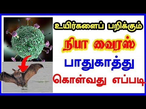 இந்தியாவில் பரவும் நிபா வைரஸ் வெளிநாடு வாழ் இந்தியர்களை பாதிக்குமா?  Nipah virus in Kerala, 15 dead,
