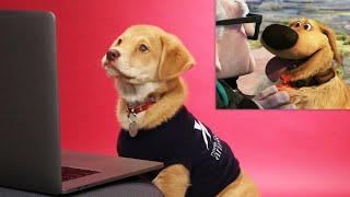 Puppies Critique Famous Movie Dogs