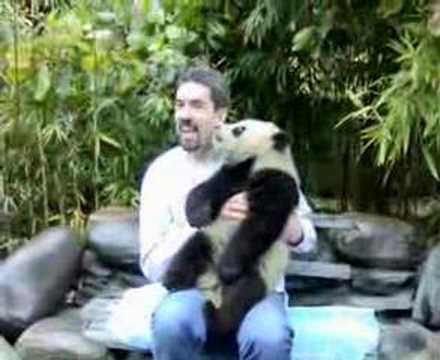 Panda - Hugging a Panda Cub near Chengdu