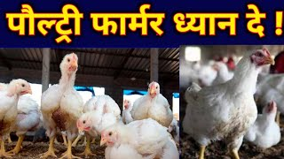 पौल्ट्री फार्मर ध्यान दे। poultry selling market analysis today
