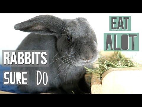 Rabbits Sure Do Eat A Lot