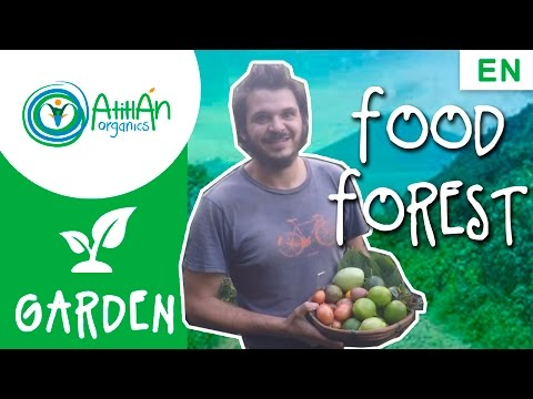 How to Plant a Food Forest
