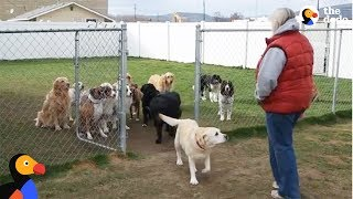 Good Dogs Wait For Their Names To Be Called | The Dodo