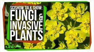 Fungi and Invasive Plants: SciShow Talk Show