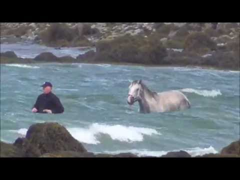 Ocean Therapy for Horses