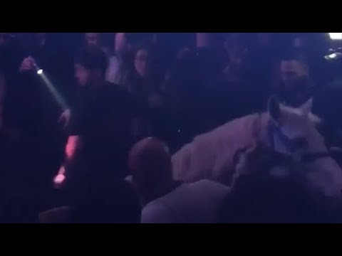 Horse panics as woman rides it on to club dancefloor