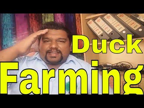 Duck Farming in Pakistan