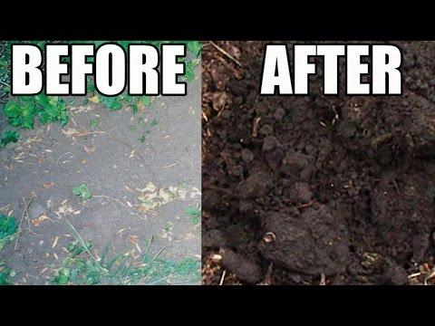 Amazing Garden Soil Transformation Using Wood Chips!