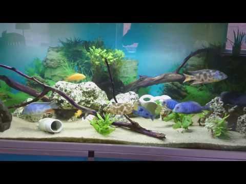 eBay Aquarium light