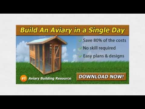 How To Build A Large Bird Aviary