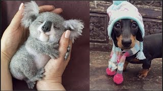 Cute baby animals Videos Compilation cute moment of the animals - Cutest Animals #1