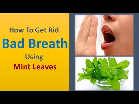 How To Get Rid Bad Breath INSTANTLY - Using Mint Leaves Get Rid Bad Breath For All