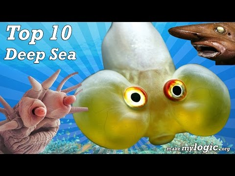 Deep Sea Creatures - Top 10 Most Amazing Sea Creatures Ever Discovered!