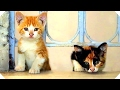 Download           KEDI (Movie HD) Best Cats Documentary Movie of the Year MP3,3GP,MP4