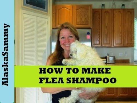 Make Flea Shampoo for Dogs