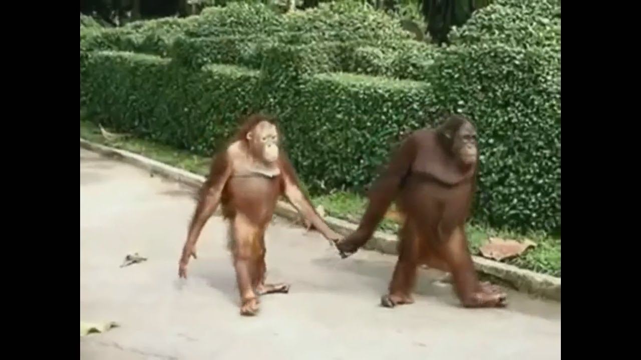 Animals Acting like Humans #1 • Reddit Compilation