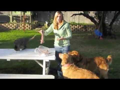 Feeding Primal Raw Turkey Necks to Dogs