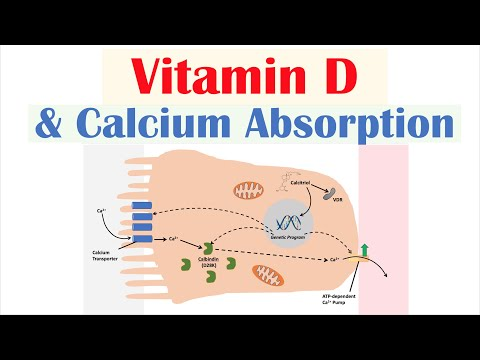 Vitamin D and Calcium Absorption - Biochemistry Lesson