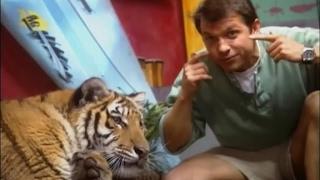 """Zoboomafoo Cap. 47: """"Y el Tigre... Revienta"""""""