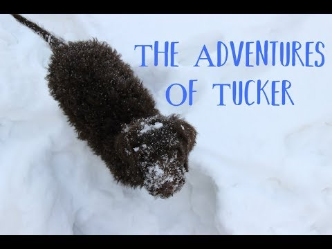 The Adventures Of Tucker! - His First Few Days Home // Jan 8th -11th //