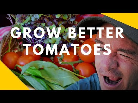 Grow Better Tomatoes using Minerals See the Difference
