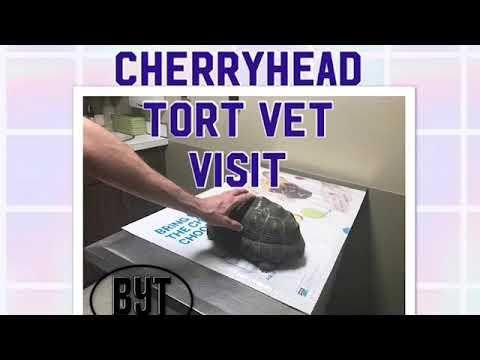 Tortoise vet visit