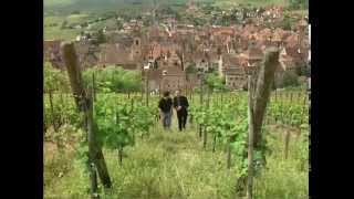 Discover the Wines of Alsace