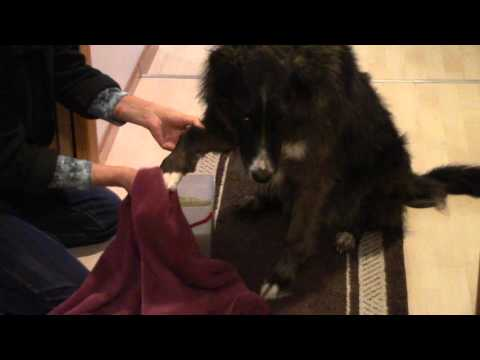 Muddy Paws - Simple Way to Clean a Dog's Paws