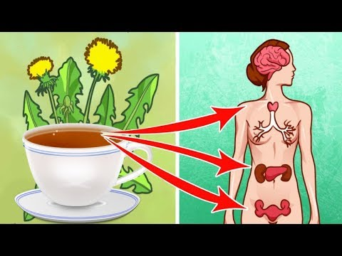 7 Reasons You Should Drink A Cup Of Dandelion Tea Everyday