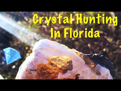 Crystal Hunting in Florida at Rucks Pit for Calcite in Fossil Clams